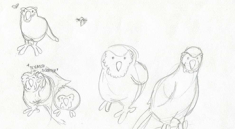 portfolio_kakapo-sketch2